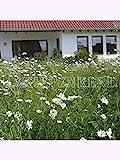 Kiepenkerl Rieger-Hofmann Blumenrasen, Kräuterrasen - 1kg