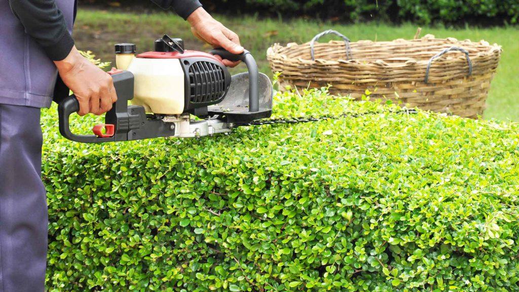 Garten-Fibel - Die Schritt für Schritt Anleitung zum Hecke schneiden
