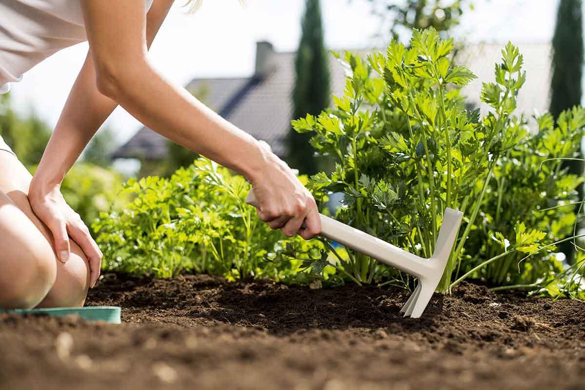 Garten-Fibel Werkzeug Set Doppelhacke im Einsatz bei der Gartenarbeit