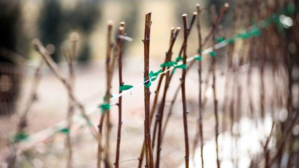 Gartenfibel Gartenmagazin Gartenkalender Gartenmonat Januar