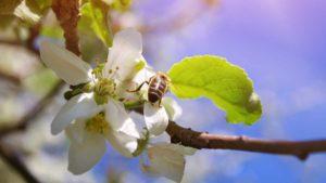 Gartenfibel Gartenmagazin Gartenkalender Gartenmonat April
