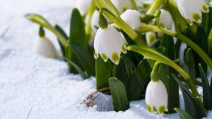 Gartenfibel Gartenmagazin Gartenkalender Gartenmonat März