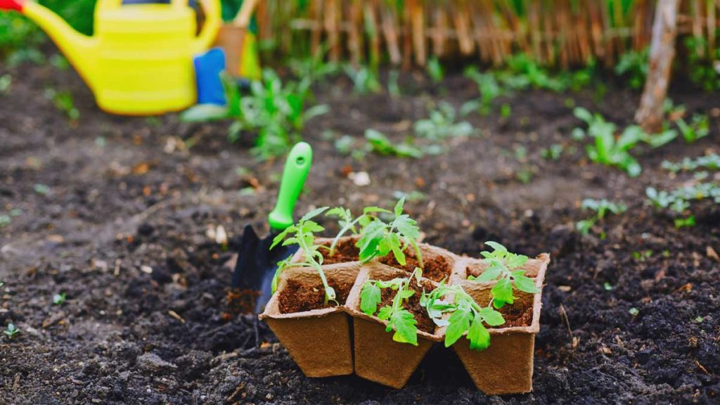 Gartenfibel Gartenmagazin Gartenkalender Gartenmonat Mai