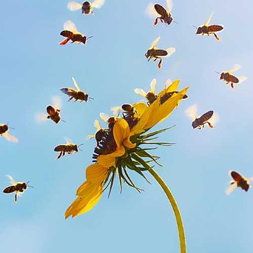 Insekten umschwirren eine Blume, bevor sie in ihre Insektennisthilfe zurückkehren