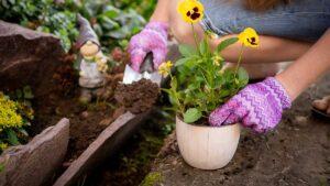 Gartenfibel Gartenmagazin Gartenkalender Gartenmonat Juni