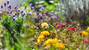 Gartenfibel Gartenmagazin Gartenkalender Gartenmonat Juli