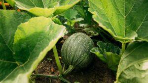 Gartenfibel Gartenmagazin Gartenkalender Gartenmonat August