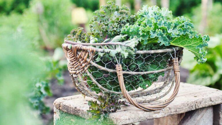 Gartenfibel Gartenmagazin Gartenkalender Gartenmonat Oktober