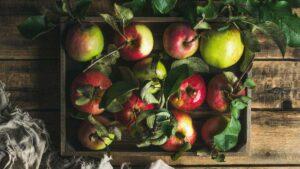Gartenfibel Gartenmagazin Gartenkalender Gartenmonat September